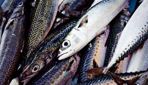 【うまいもん屋 余市店】赤むつ・アブラボウズなどをメインにした魚料理を提供